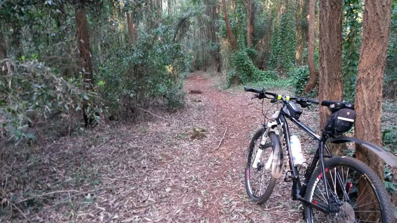 Watch for tree roots and tree stumps along this awesome singletrack.