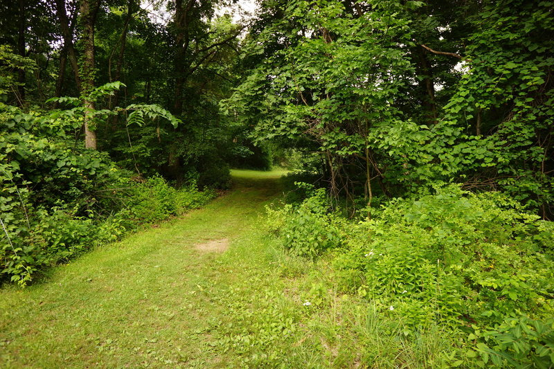 Hang a right off and stay straight downhill to skip portions of the overgrown White Trail.