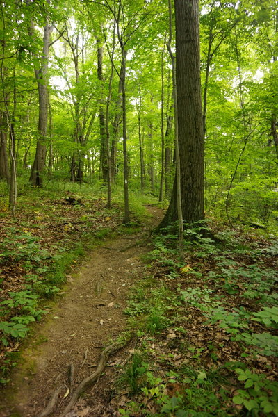 Downhill section of White Trail.