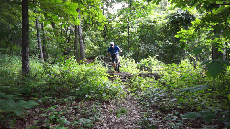 Over the first large log jump.