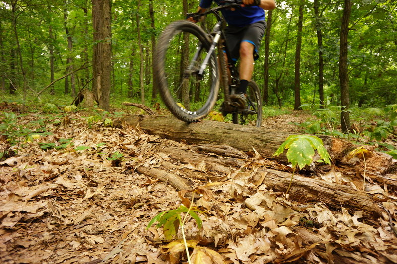 Small log jump before quick downhill.