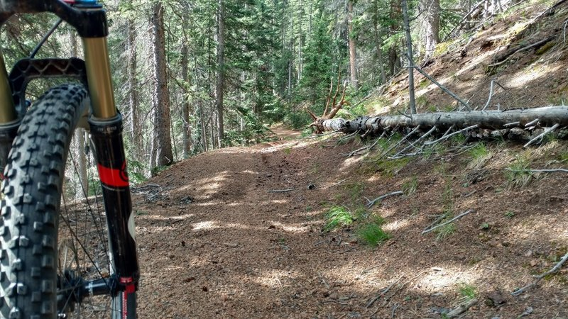 Flowing singletrack through the pines.