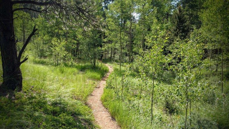 Stunning aspen grove at the top of Seven Bridges Trail.
