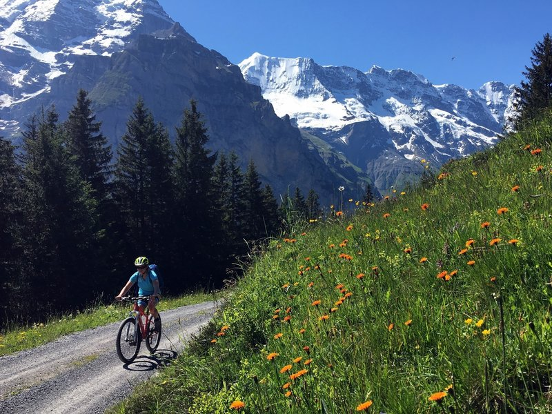 Wildflowers galore in the Bernese Oberland.