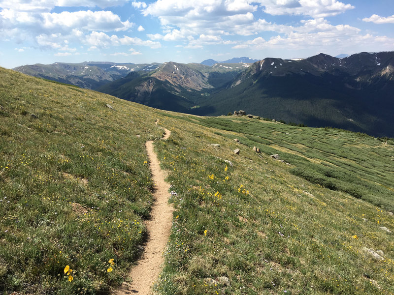 Once you make it down to this meadow, the trail mellows out for a bit and amazing great views.