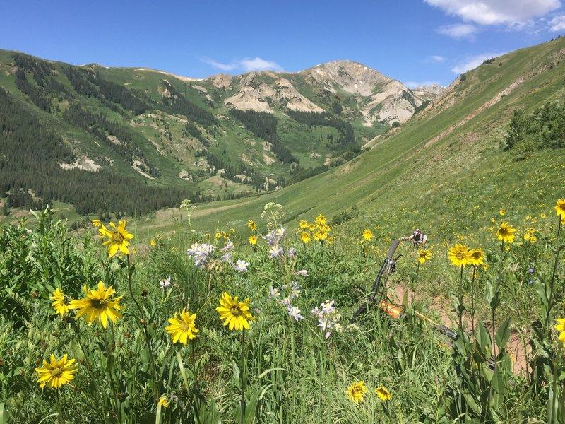 Nice wildflowers.