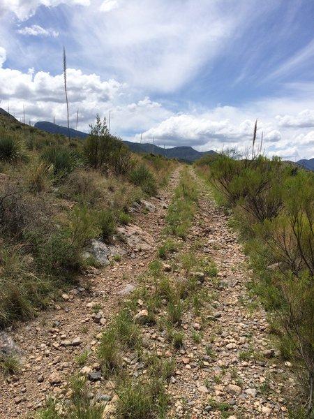 Heading towards Ramsey Canyon Road.