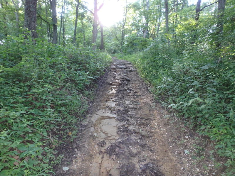Rough section of the horse trail.