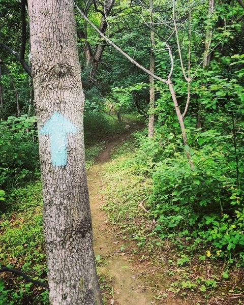 I have been out marking the trails, Blue blaze for the main loop now.