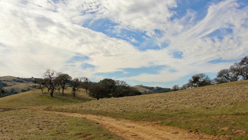 Morgan Territory Regional Preserve, Blue Oak Trail.