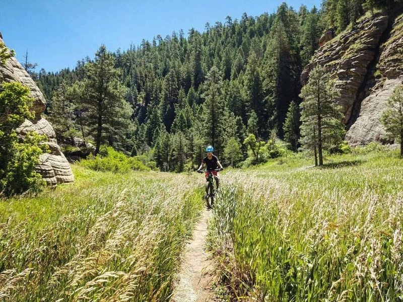 Flagstaff AZ has some of the greenest trails we've ever ridden.