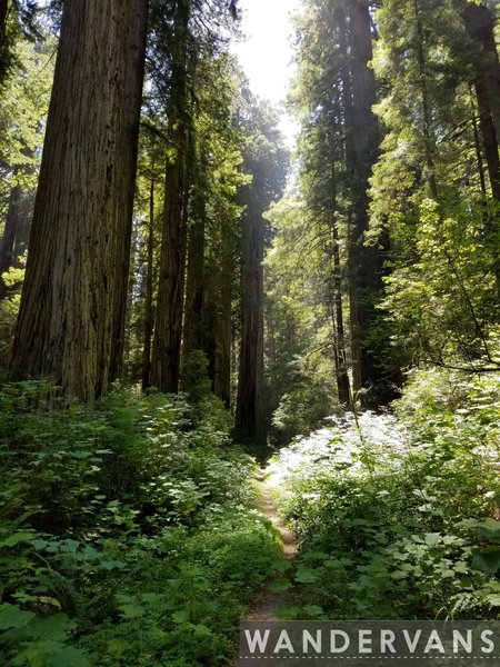 Take in the wonderful redwoods.