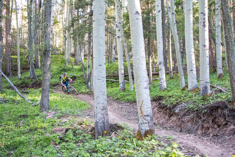 Such sweet singletrack on Heaven on Earth... the trail deserves its name!
