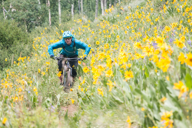 Wildflowers in Crested Butte on Walrod Cutoff!