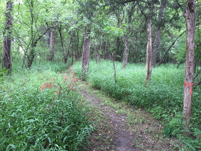 This is a great ride through the woods along the Arkansas River!