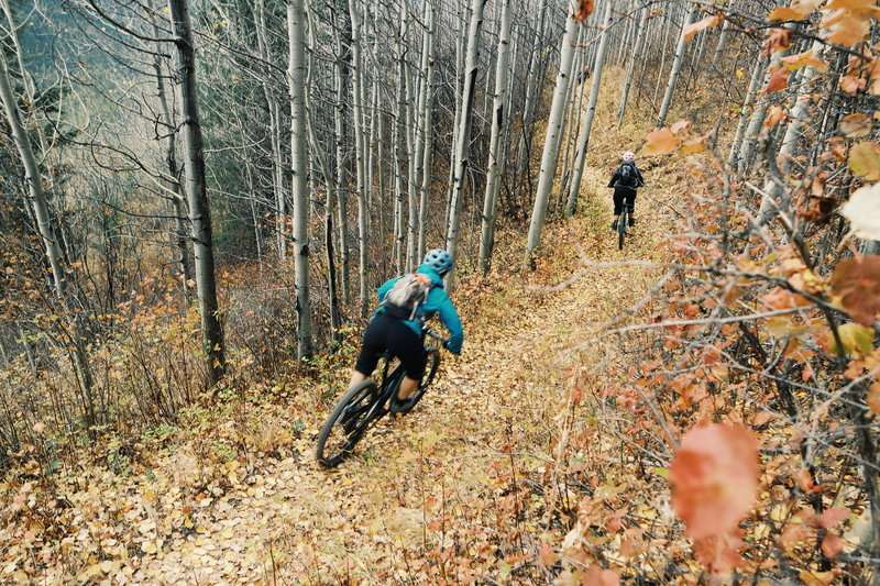 Riding through Aspens in the Fall.