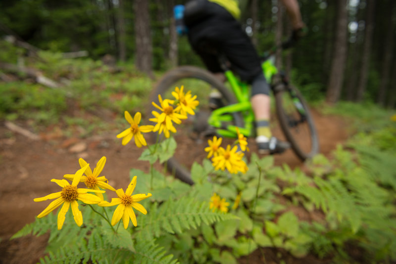 Randall Foster pedals past a pocket of flowers along Borderline (133) during the Cascadia Dirt Cup at Post Canyon, OR.