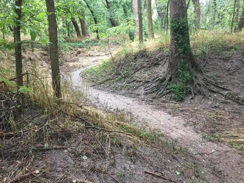 The trail drops down into an area that probably carries water, not sure.