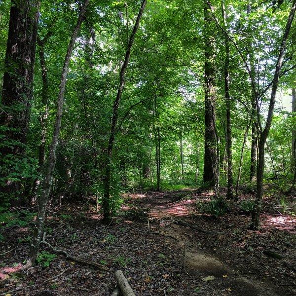 Main trail.