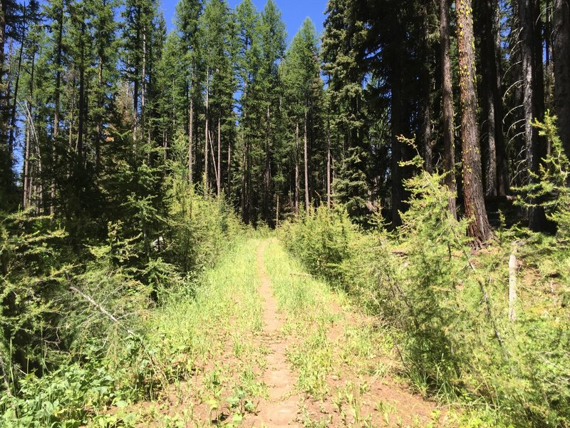 Nice singletrack as you transition to the alpine, rugged trail.