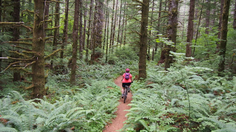 Almost to the Storey Burn Trailhead!