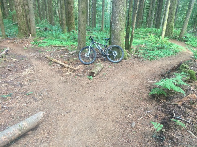 Another split in the trail to allow you to 'choose your own adventure'.