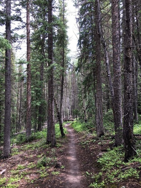 Flowy downhill through the trees.
