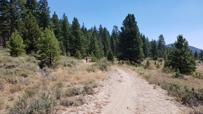 Lake Davis Trail near Lightning Tree Campground.