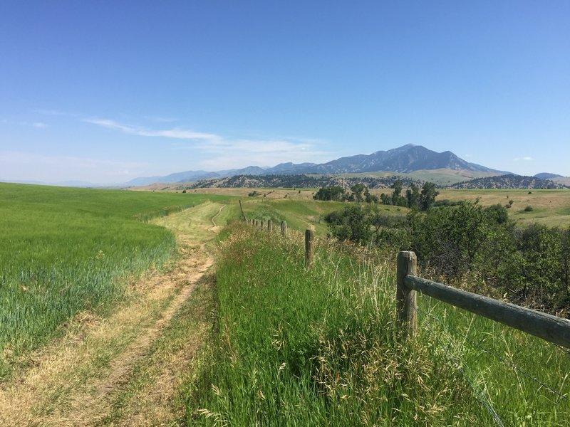 View of Bridgers.