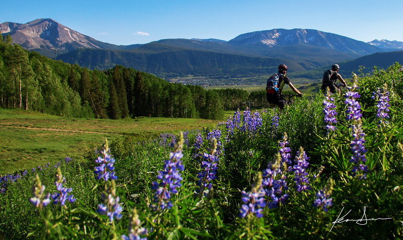 Lupine and mountain biking above town.