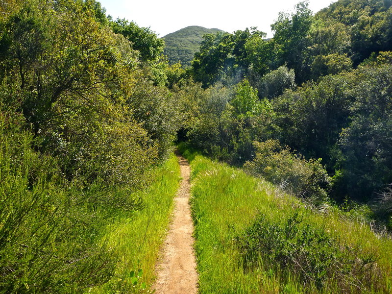 Along the Backbone Trail. with permission from laollis