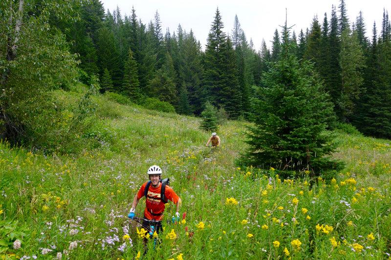 Riding through tall vegetation on the Straight Creek Trail.