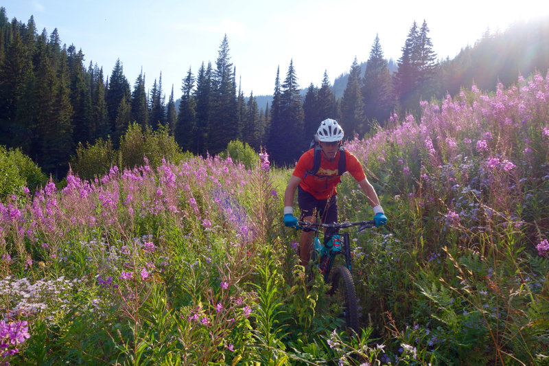 Descending through fireweed.