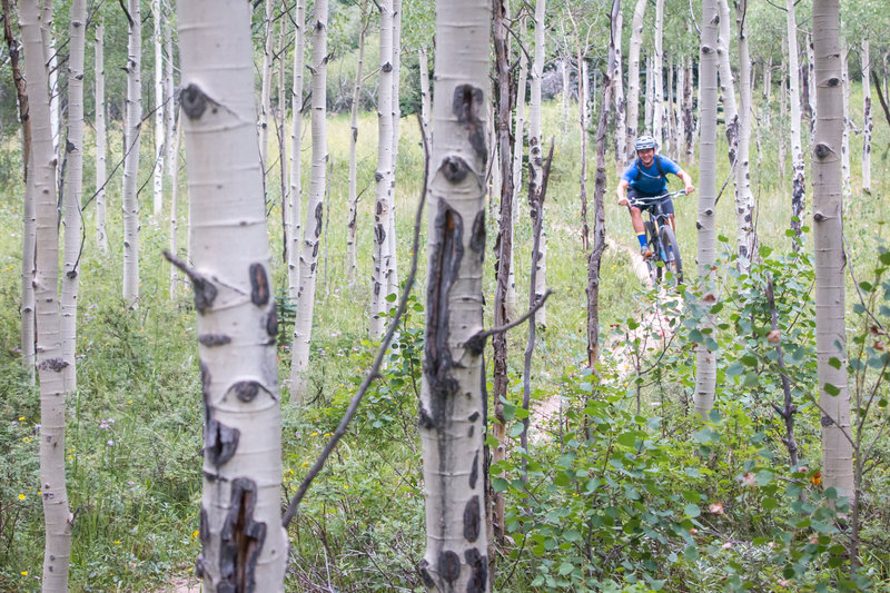 Rippin' through the aspens at 9,000 feet in Golden Gate Canyon State Park