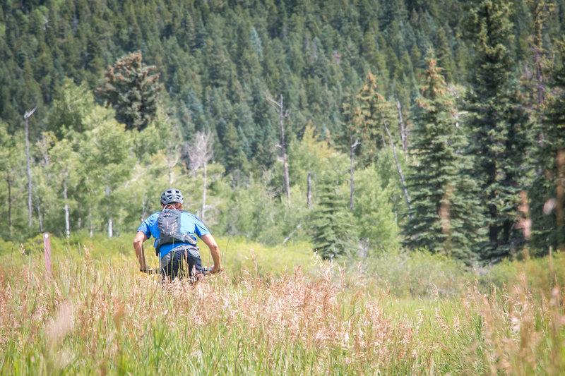 Climbing through a wide open meadow on the Mule Deer Loop