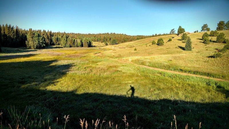 Morning shadows along Elk Meadow Trail.