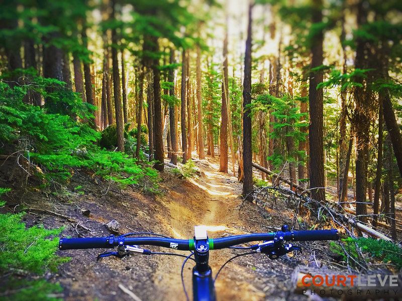 Endless trails in OR...