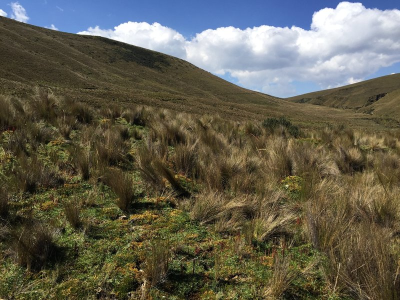 Paramo wilderness. Bench cut singletrack pictured descending mountainside in center background of image.
