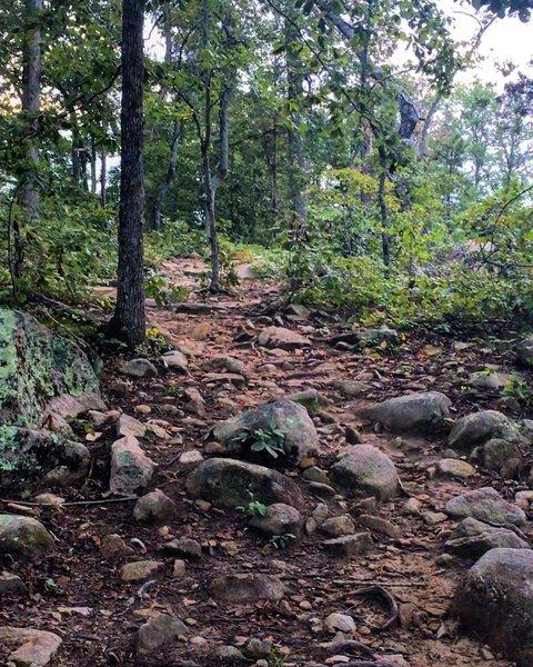 Part of the rockgarden area!