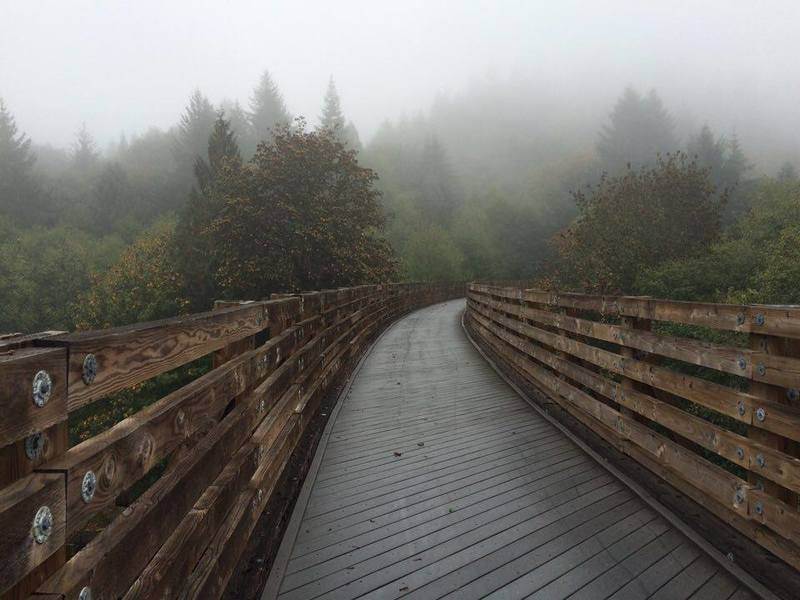 Foggy morning on the Buxton Trestle.