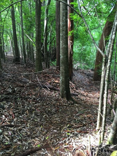 Typical view going down the trail.
