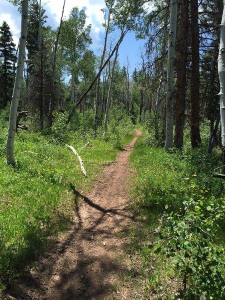 Buck Trail singletrack.
