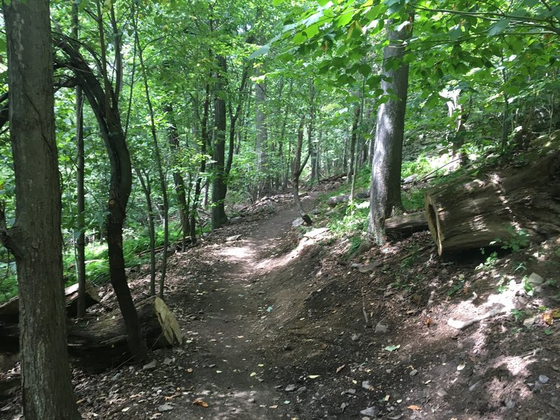 Downhill section on the new Indian Turnip Trail - Deep Creek Lake SP.