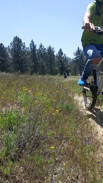 Singletrack throughout the meadows, just going back and forth in this area is tempting!