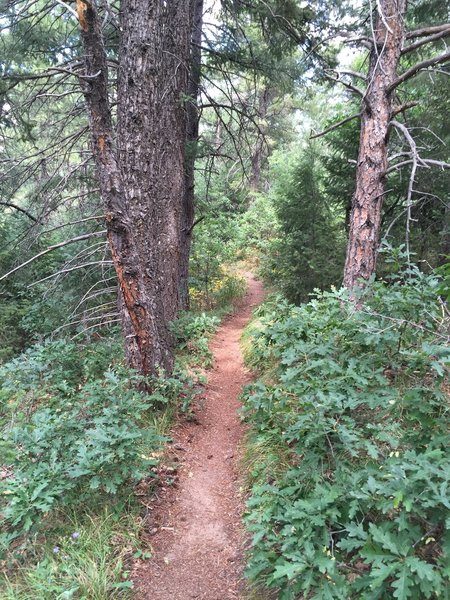 Great Indian Creek singletrack.