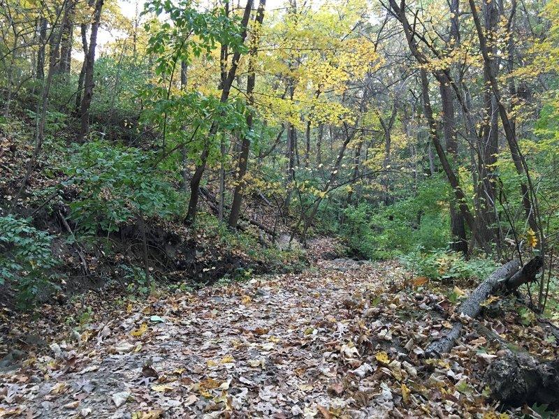 Cruising along the Bullfrog Lake Trail under the cover of fallen leaves.