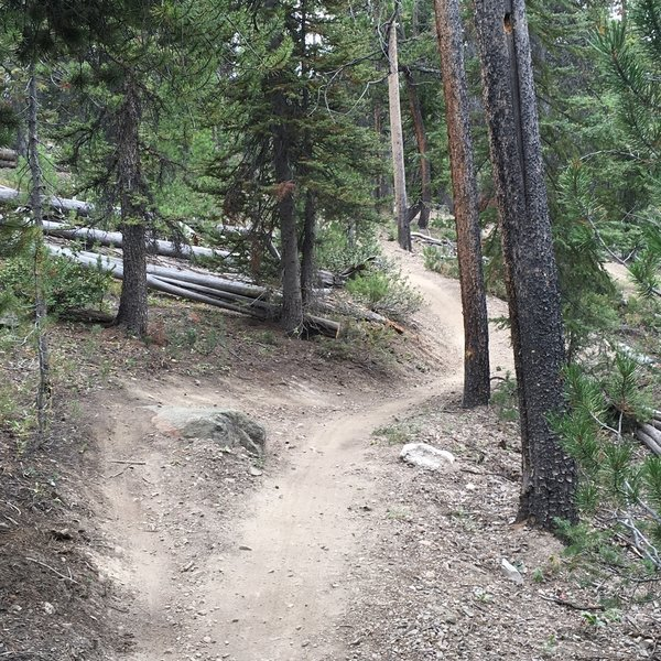 Lots of natural B-line features have been left during the construction of the trails.