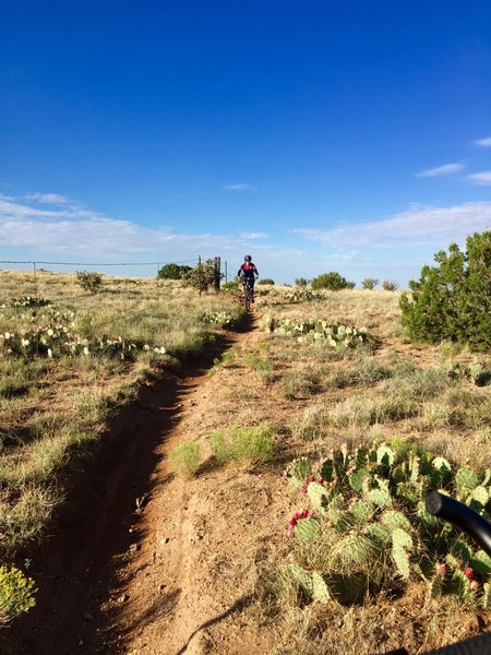 Cattle Fence Trail.