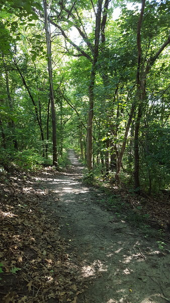 Singletrack along the ridge's contours, through the forest of Grandview Park.