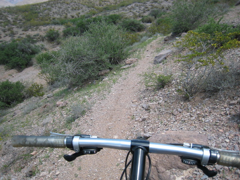 Sierra Vista Trail near the Dripping Springs trailhead.